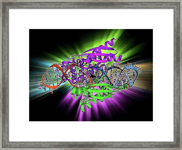 Double-stranded Rna-ribonuclease IIi Framed Print
