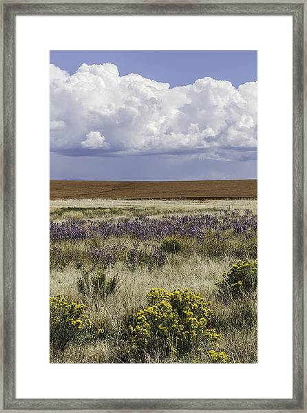 Dove Creek Fall Flowers Framed Print