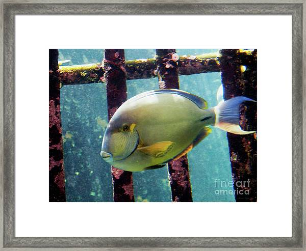 Down At The Shipwreck Framed Print