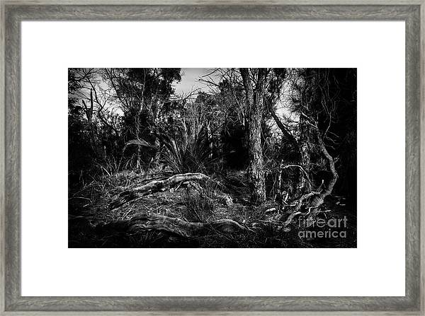 Down In The Woods Framed Print