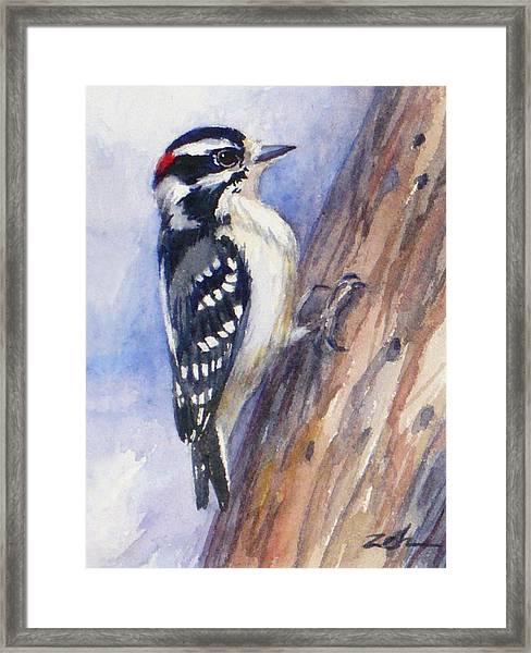 Downey Woodpecker Framed Print