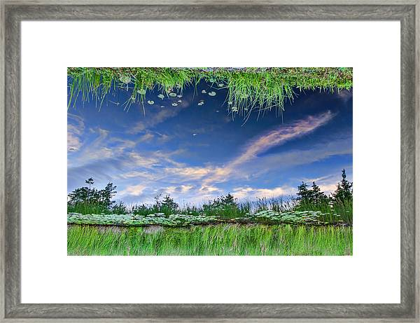 Framed Print featuring the photograph Downside Up by Beth Sawickie
