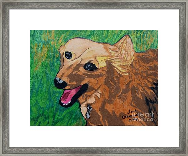 Doxie Framed Print