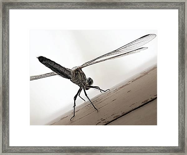 Dragon Of The Air  Framed Print