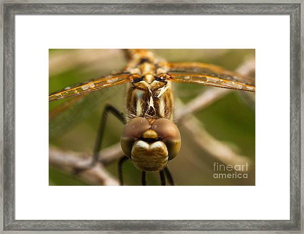 Dragonfly Head Framed Print by Mae Wertz