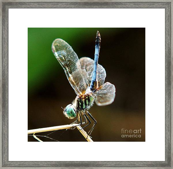 Dragonfly Headstand Framed Print