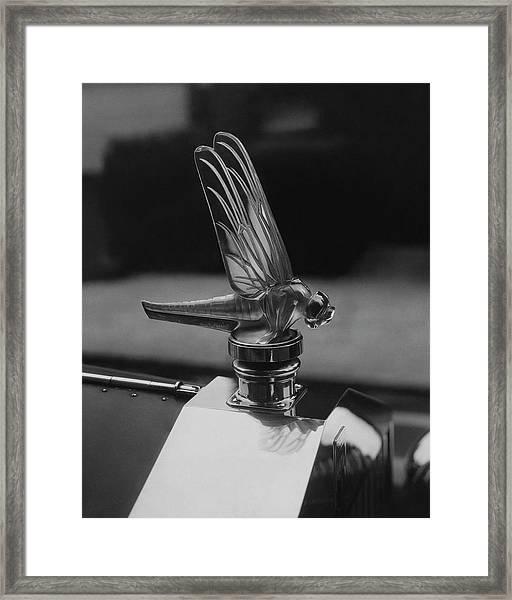 Dragonfly Hood Ornament Framed Print