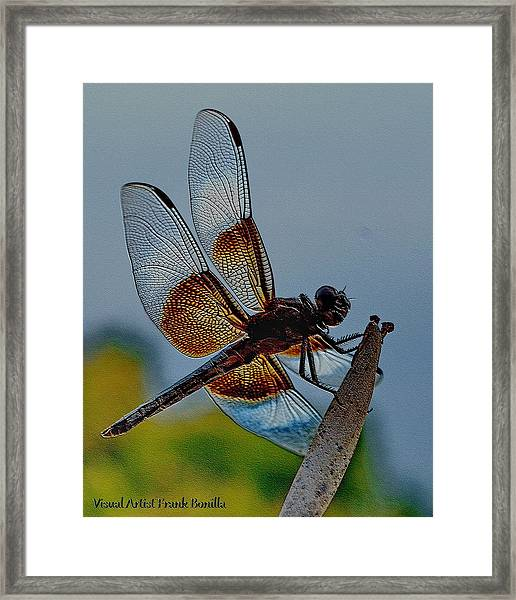 Framed Print featuring the digital art Dragonfly Sky Print by Visual Artist Frank Bonilla