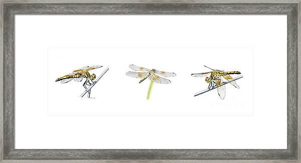 Dragonfly Trilogy Framed Print