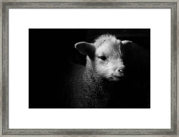 Dramatic Lamb Black & White Framed Print