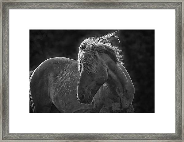 Dramatic Wild Mustang Framed Print