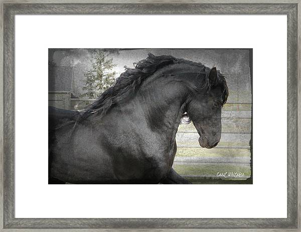 Dream Friesian Framed Print