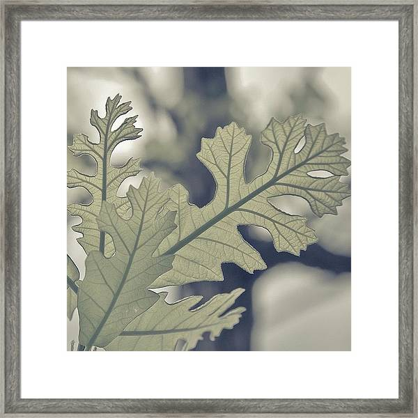 Dreamt Myself Astray | #spring #nature Framed Print by Lotus Carroll