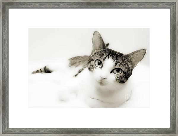Dreamy Cat 2 Framed Print
