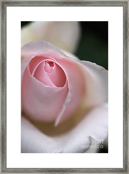 Dreamy Rose Framed Print