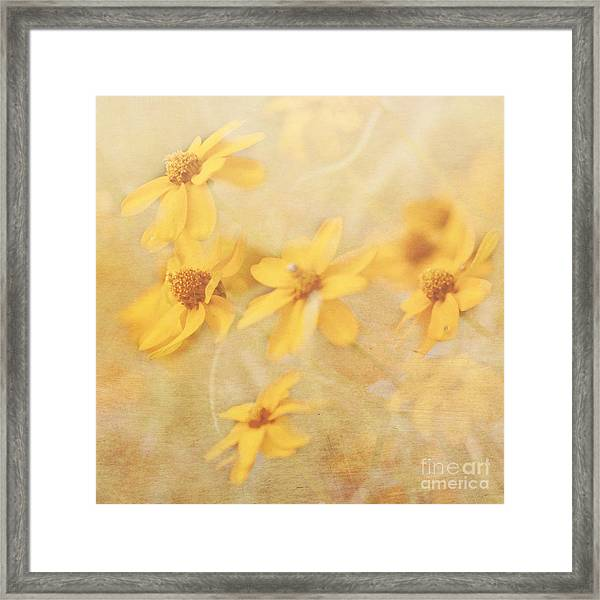 Dreamy Yellow Coreopsis Framed Print