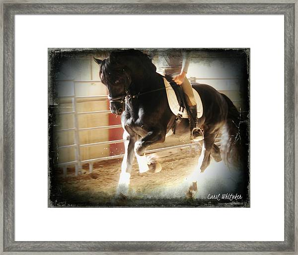 Dressage Training Framed Print