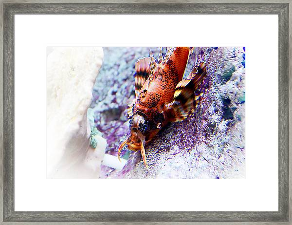 Dressed Up... Framed Print