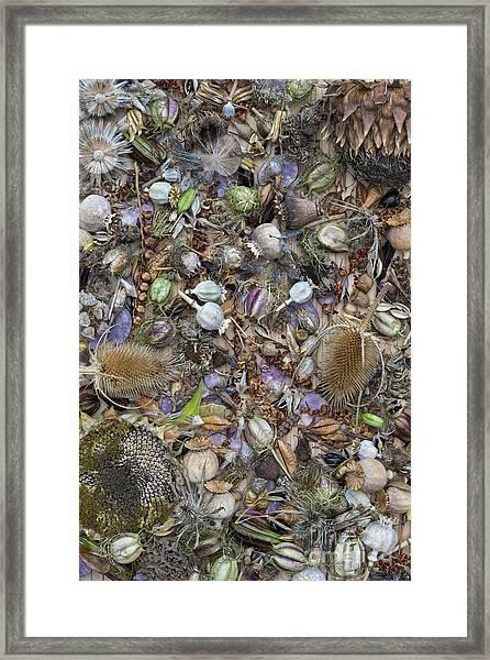 Dried Flower Seeds Framed Print