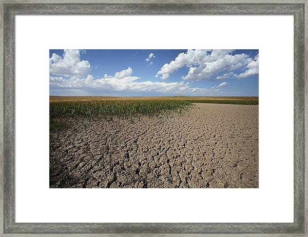 Dried Up Natural Pond Framed Print