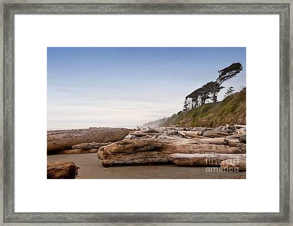 Drift Logs Tossed Like Pick-up Sticks Upon Pacific Coast Beach Framed Print