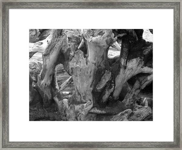 Drift Wood Cove Framed Print