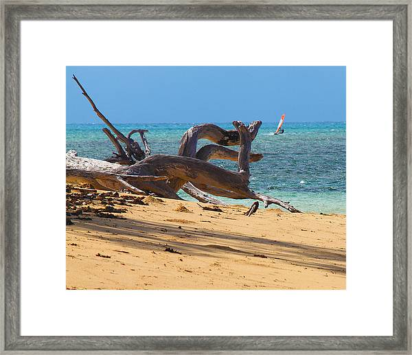 Framed Print featuring the photograph Drift Wood by Debbie Cundy
