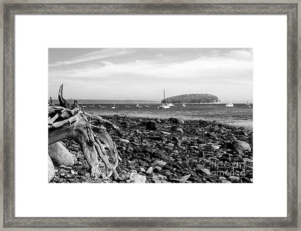 Driftwood And Harbor Framed Print