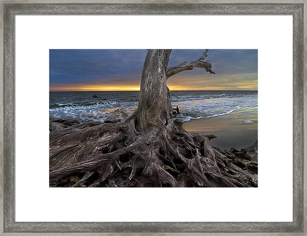 Driftwood On Jekyll Island Framed Print