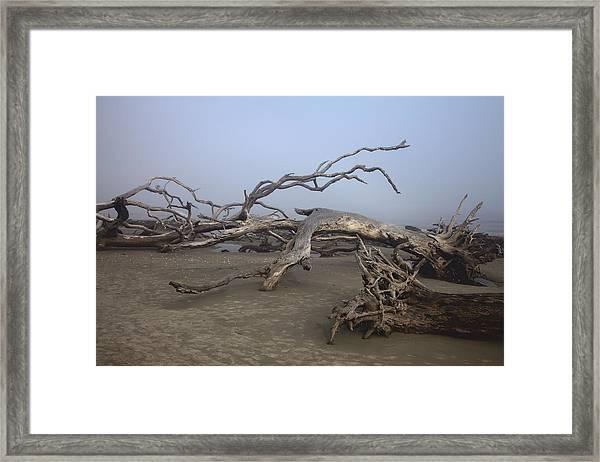 Driftwood Trees On Jekyll Island Framed Print