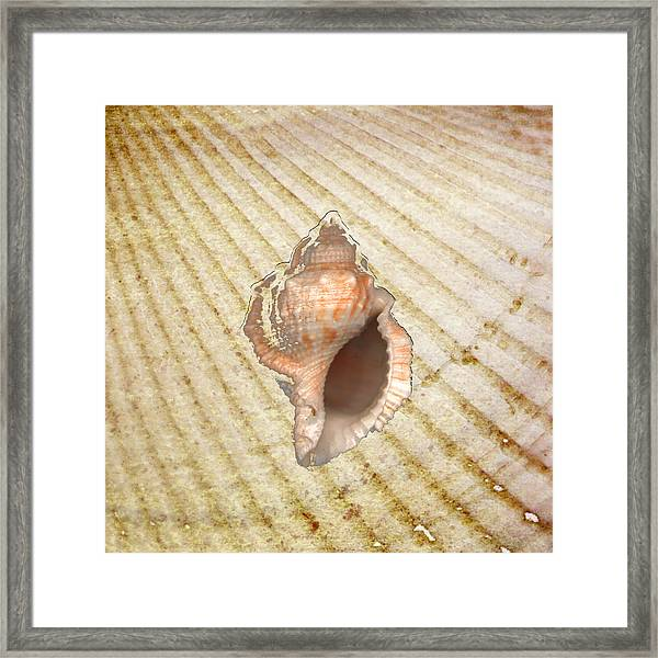 Drill Seashell On Sandy Background Framed Print by Jeff Venier