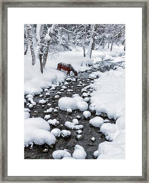 Drinking In Snow Framed Print by Hua Zhu