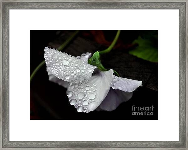 Droplets 2 Framed Print