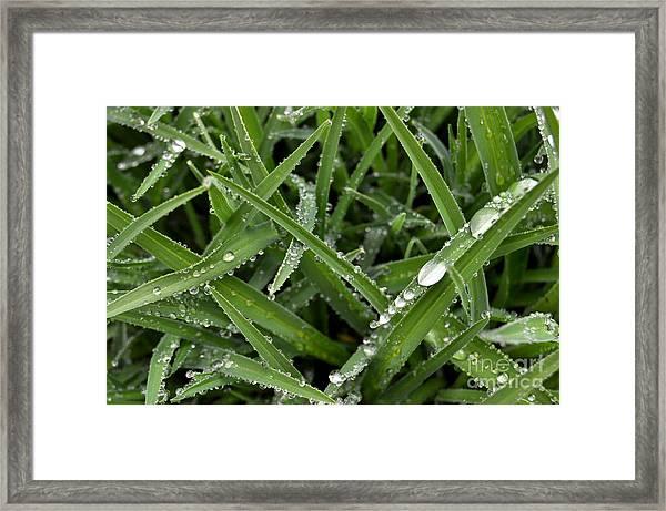 Droplets 5 Framed Print
