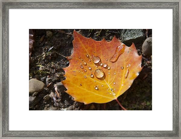 Droplets In Autumn Leaf Framed Print
