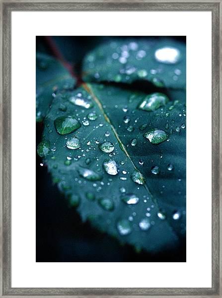 Droplets Framed Print