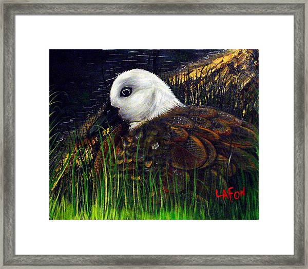 Duck At Dusk Framed Print