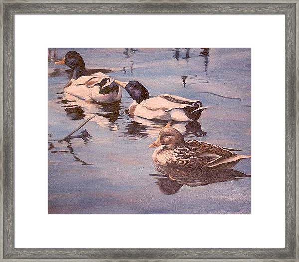Ducks On The Cachuma Framed Print