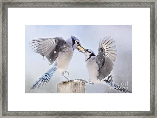 Dueling Jays Framed Print