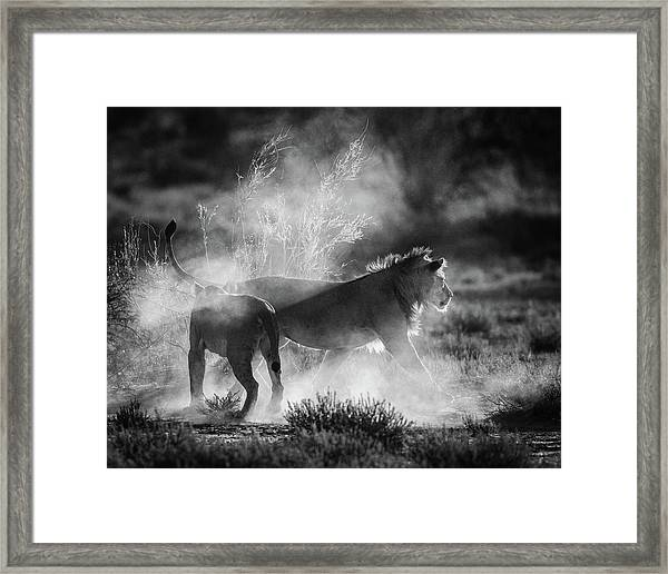 Dust Cats Framed Print by Jaco Marx