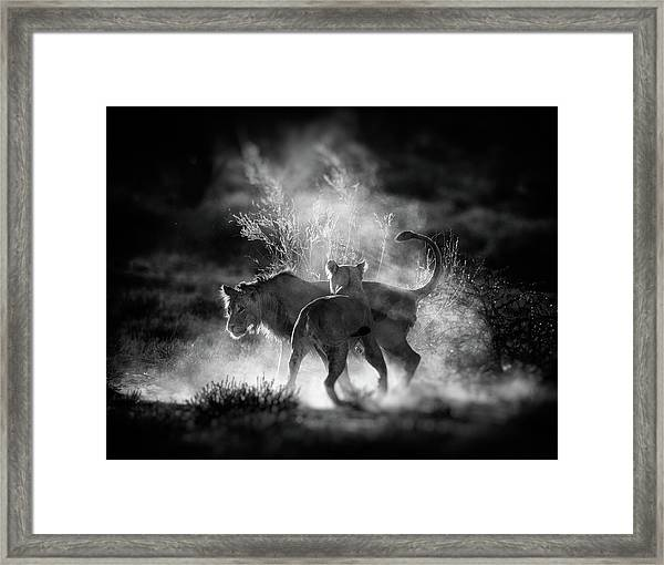 Dust Framed Print by Jaco Marx
