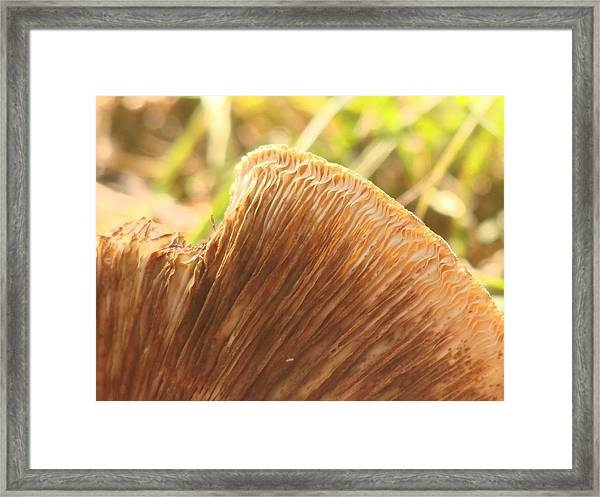 Dying Decay Framed Print by Kristina Mitchell