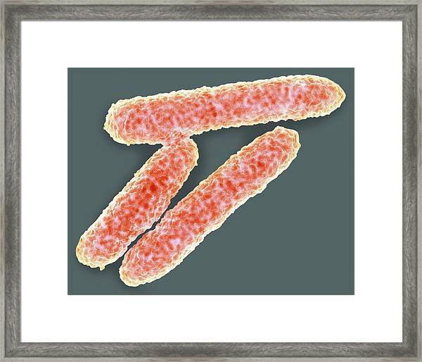 E. Coli Bacteria Framed Print by Science Photo Library