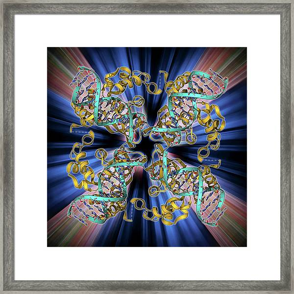 E Coli Holliday Junction Complex Framed Print