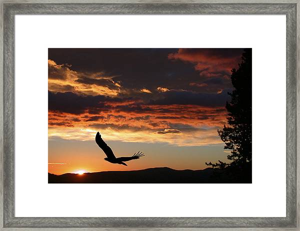Eagle At Sunset Framed Print