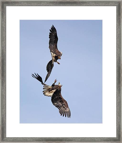 Eagle Ballet Framed Print