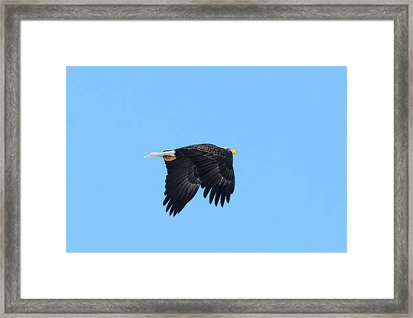 Framed Print featuring the photograph Eagle Eye by David Armstrong