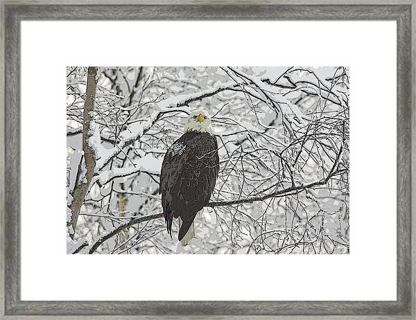 Eagle In Snow- Abstract Framed Print by Tim Grams