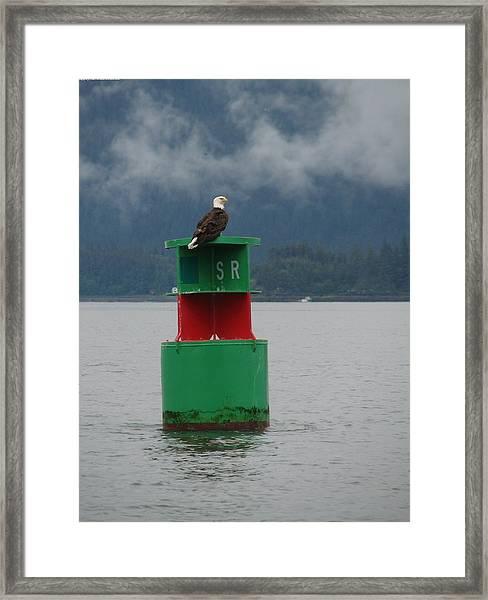 Eagle On Bouy Framed Print