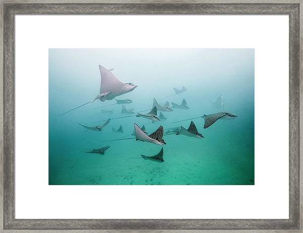 Eagle Rays Framed Print
